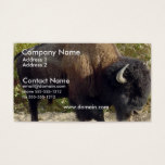 Buffalo Business Card