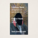 Curious African Crowned Crane Business Card