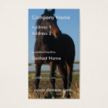 Dark Bay Horse Business Card