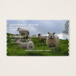 Grazing Sheep Business Card
