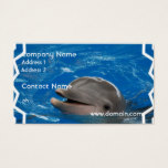 Lovable Dolphin Business Card