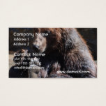 Soaking Bear Business Card